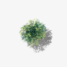 Overlooking the flowering camphor tree PNG and Clipart Tree Plan Photoshop, Photoshop Rendering, Photoshop Images, Photoshop Ideas, Landscape Elements, Landscape Design, Trees Top View, Tree People, Tree Clipart