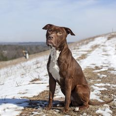 1/20/16 sl***09/22/15******-Landfill Dogs - Chandler        Status:Waiting for a home Impoundment#:97507 Breed:Pit Gender:M Age:1.7 Days in shelter:571 days Shelter Photo:  Hi, its Chandler, catch me if you can! No worries because I will make it easy for you, I will run and jump right into your arms! Ive been searching for a family who give me the love and affection all shelter pups like me yearn for.