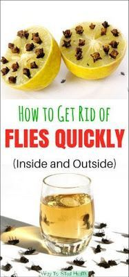 Get rid of flies indoors in the house and garage and outdoors on the patio and in the garden with these pest control home remedies, tips and fly traps using apple cider vinegar Keep Flies Away, Get Rid Of Flies, How To Repel Flies, Keep Bugs Away, Home Remedies, Natural Remedies, Health Remedies, Fly Repellant, Insect Repellent