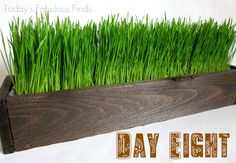 Everything you need to know to build planters and grow wheat grass for decor before a party!
