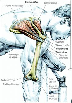 #Stretching: How to Stretch the Rotator Cuff #exercise