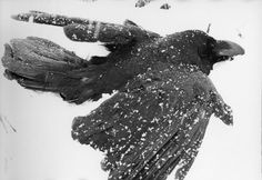 The Solitude of Ravens, 1986. Photographer Masahisa Fukase was born on 25 February 1934 in Hokkaido. In 1992, Fukase suffered traumatic brain injury from a fall, and remained in a coma. He died on 9 June 2012.
