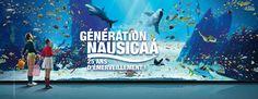 Aquarium Nausicaa : le lieu idéal pour découvrir toutes les formes de vie dans l'eau ! Et puis on a toute la plage pour dérouler la bande noire et finir en beauté !