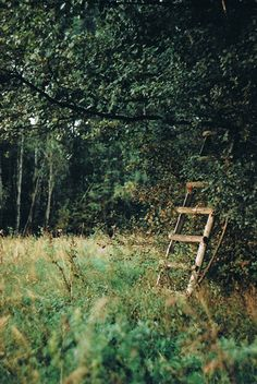 bleaken:  vintage & nature blog