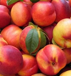 Nectarines are in season during the summer