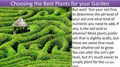Choosing the Best Plants for your Gardens: (via https://www.youtube.com/watch?v=F7m9JhNzw5Y)