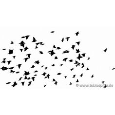 flying birds ❤ liked on Polyvore featuring birds, backgrounds, animals, effects and fillers
