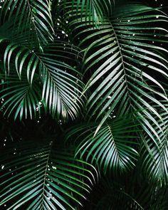 "PLANTS IN FOCUS (@plantsinfocus) on Instagram: ""via: @_gypseaa _______________________ #plantsinfocus #растениявкадре _______________________…"""