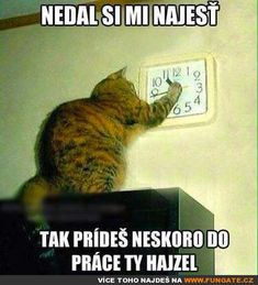 Nedal si mi najíst... Stupid Memes, Funny Jokes, Funny Images, Funny Pictures, Funny Cats, Funny Animals, Some Jokes, Smile Photo, Picture Quotes