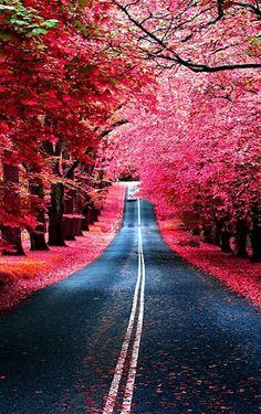 Pink Flower Road