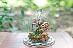 Butterfly Glass Dome Small Terrarium Kit by TheAmateurNaturalist, $42.00