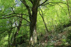 Halsdon Woods | by EmyJSkylark