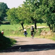 Bicycle touring in southern France along quiet roads bordered by walnut trees. #bicycle touring