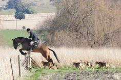 Ghoulburn Valley Hunt Tally Ho, Fox Hunting, The Fox And The Hound, Hunters, Equestrian, Birth, Horses, Dogs, Animals