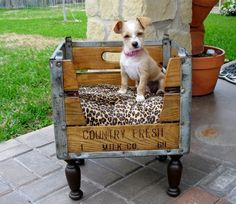 Small pet beds can be used for dogs or cats often include a comfy cushion. Here are ideas for custom or DIY projects small pet beds using crates or barrels. Diy Dog Bed, Diy Bed, Milk Crates, Pet Furniture, Animal Projects, Diy Projects, Pet Beds, Doggie Beds, Bunk Beds