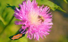 Risultati immagini per bee flowers