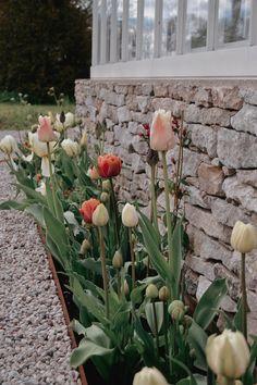 Autumn Garden, Easy Garden, Spring Garden, Garden Pots, Green Nature, Flowers Nature, Outdoor Plants, Outdoor Gardens, Purple Garden