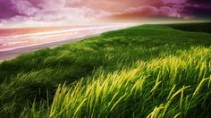 scenic wallpapers, beach wallpapers, grass wallpapers, field wallpapers, dune wallpapers, hills wallpapers, sky wallpapers, purple wallpapers, orange wallpapers, dusk wallpapers, colorful wallpapers, sunset wallpapers, water wallpapers, ocean wallpapers, sea wallpapers