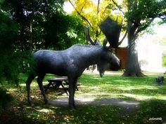 Moose in Old Oakville - Old Oakville Moose, Animals, Elk, Animales, Animaux, Animal, Animais