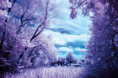 How to shoot infrared photography with a filter: step 4