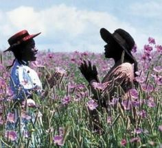 """""""Pisses God off if you walk by the color purple in a field somewhere and don't notice it."""" 'The Color Purple', written by Alice Walker, adapted into film, directed by Stephen Spielberg. Sad Movies, Great Movies, Movies To Watch, Netflix Movies, Beau Film, Alice Walker, Jonathan Safran Foer, Sound Of Music, Harold Et Maude"""