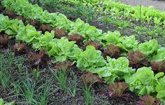 Картинки по запросу planted vegetables