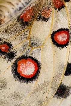 Butterfly wing  Photographer Martin Amm