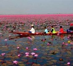 The Pink Lake (Lotus lake), Thailand