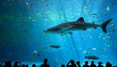 Turkuazoo - Top 10 Best Aquariums In The World You Must Visit