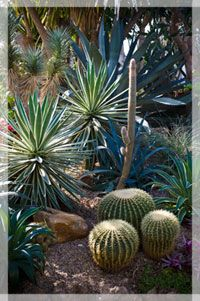 Miller Nature Preserve in Avon - carnivorous plants :)