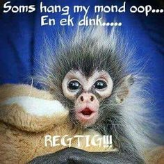 Soms hang my mond oop. Witty Quotes Humor, Cute Quotes, Best Quotes, Funny Quotes, Nice Sayings, Qoutes, Friend Pictures, Funny Pictures, Funny Pics