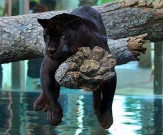 Beautiful black cat.  The Incensewoman