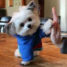 """High Five Norbert! Cute Puppies, Cute Dogs, Dogs And Puppies, Cute Babies, Doggies, Cute Baby Animals, Animals And Pets, Funny Animals, High Five"