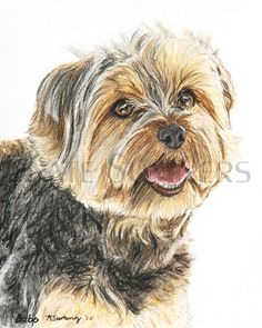 Yorkshire Terrier Art Print Painting 8x10 Yorkie Dog  Art