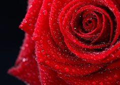 Три красные розы в тонком хрустале