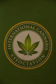 Marijuana Business Outlook 2015: Northeast Riding the Greenwave - MainStreet