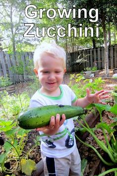 The Educators' Spin On It: ALL about growing ZUCCHINI with kids