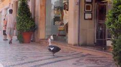 Momento In Faro - Pato na Rua de Santo António