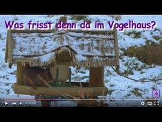 FreyaGlücksweg148 - Eichhörnchen im Vogelhaus (Vogelfutterhaus) ❤ Gedicht mit Raggae-Musik  ....... Eichhörnchen im Vogelhaus / Vogelfutterhaus, Dieb im Vogelhaus,