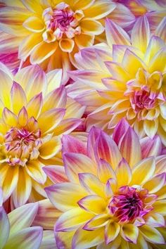 Wish this was in my garden! Beautiful #Dahlia's in Mexico
