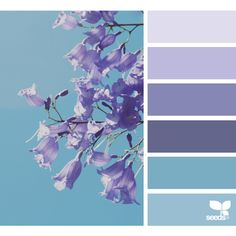 design seeds | search | for all who ♥ color ❤ liked on Polyvore featuring backgrounds, design seeds, colors, fillers and purple