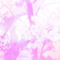 【puchan0127】さんのInstagramをピンしています。 《. . 写真整理してたら出てきた! . たぶん今年の春のお花見 . めちゃくちゃ季節はずれだ← . #桜 #🌸 #ピンク #お洒落さんと繋がりたい #ゆめかわいい #さくらメメント #アーバンギャルド  #cherryblossom #pink》