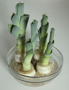 Voici 10 légumes que vous pouvez faire pousser à nouveau à la maison !!!  (explications)