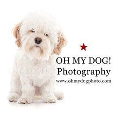 """""Excuse me, Garçon? My dish is empty."" Call 619-295-DOGS to book a #photo session! #ohmydogphotography #dogsofsandiego #northpark #sandiego #photooftheday #dogsofinstagram www.ohmydogphoto.com"" Photo taken by @ohmydogphoto on Instagram, pinned via the InstaPin iOS App! http://www.instapinapp.com (05/24/2015)"