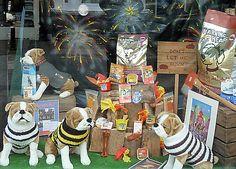 Lewes Bonfire Window Display Pet Shop | Lewes Bonfire Night … | Flickr