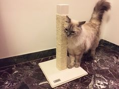White version of the handmade cat scratcher by athleticat