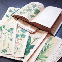 日本の植物分類学の父といわれる牧野富太郎が校訂した、明治時代の植物図鑑がもとのボタニカルアートです。【取扱店舗名|nonsense】