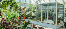 Almost any of Solar Innovations®'s glass structures can be converted into butterfly enclosures or butterfly conservatories. Diy Butterfly, Butterfly House, Monarch Butterfly, Greenhouse Supplies, Glass Structure, Backyard Greenhouse, Conservatory, Farm Life, Homesteading