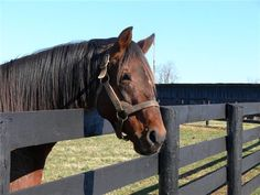 Ogygian won stakes at distances from 6 furlongs to 1 1/8 mile .  He joined Old Friends in August 2005. Photo courtesy of Kate Dunn