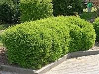 1000 images about final garden selections on pinterest. Black Bedroom Furniture Sets. Home Design Ideas